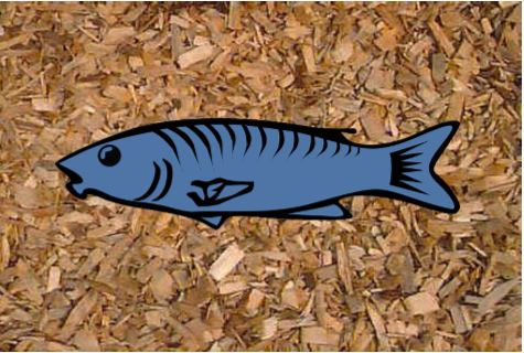 Fish laying on wood chips
